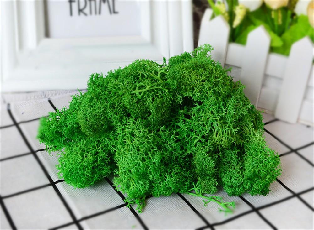 Окрашенный мох