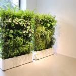 Вертикальные растения