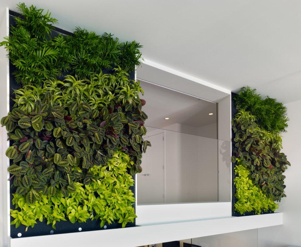 стена из растений