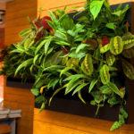 Множество растений