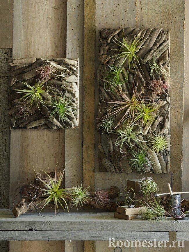 Необычные картины из растений на стене