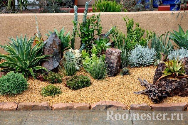 Растения в песочном грунте