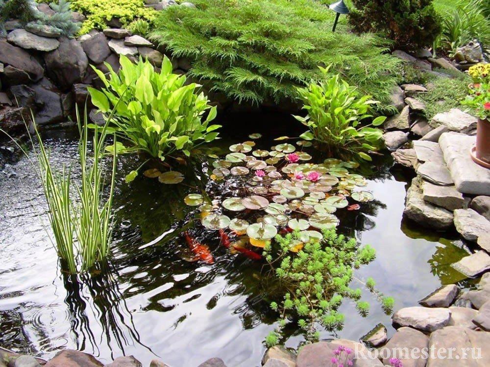 Водные растения в пруду