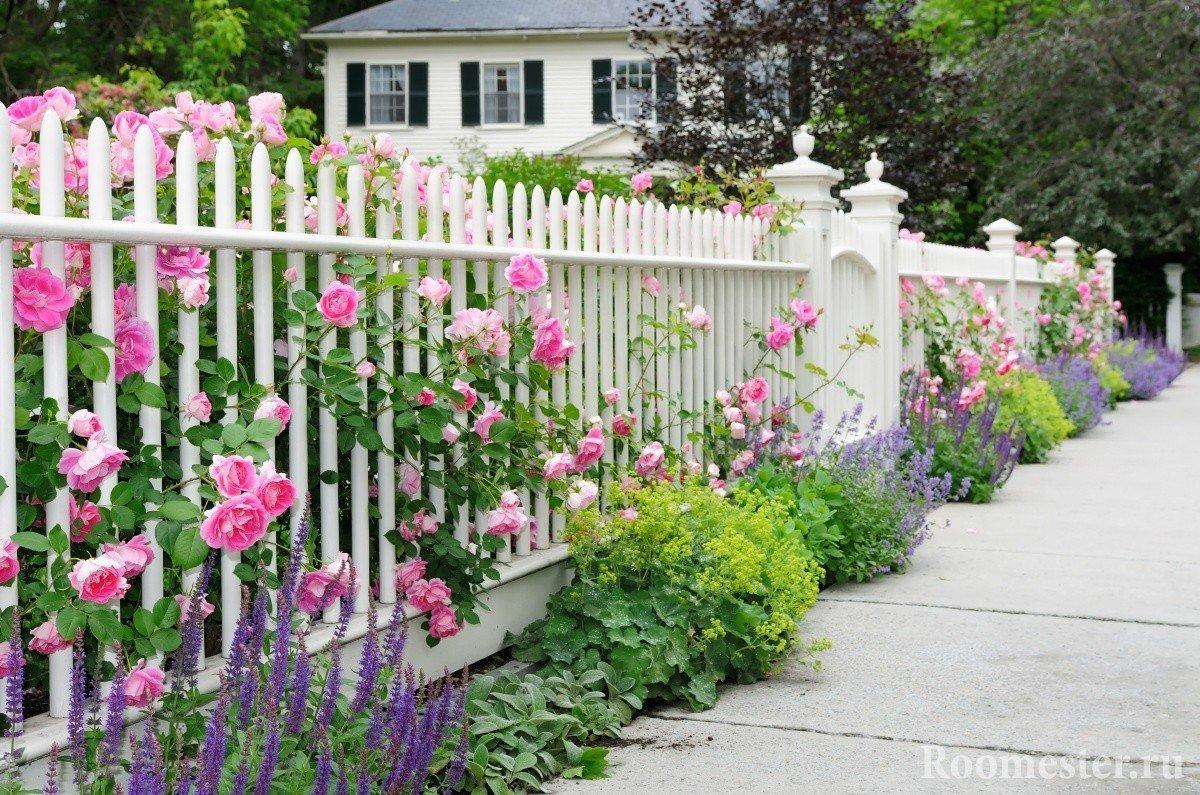 Белый забор с розами