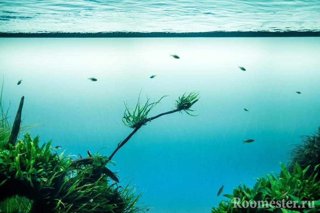 Нефорсированный травник - тип оформления аквариума