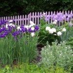 Фиолетовый забор на клумбе