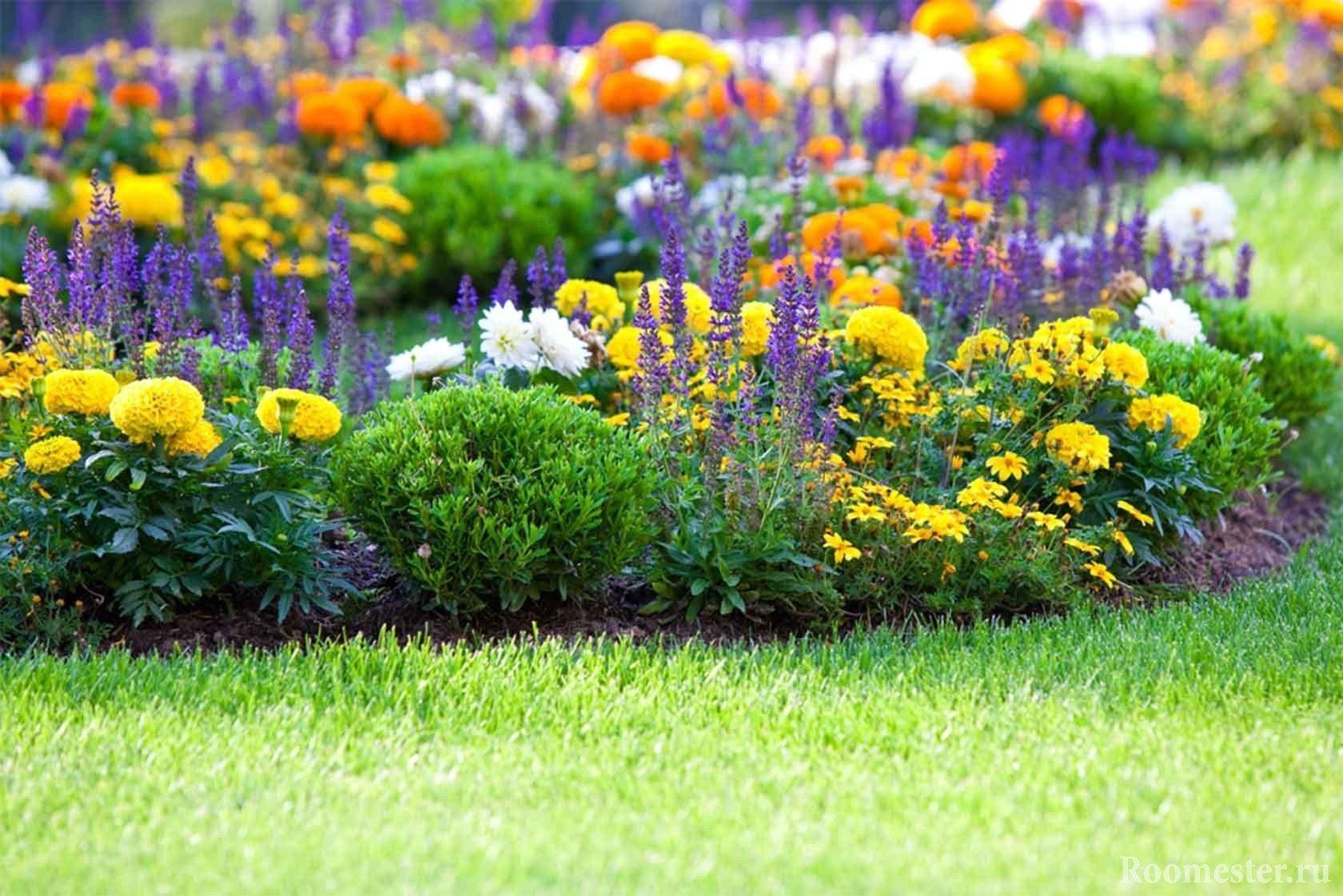 Многолетние цветы в огород