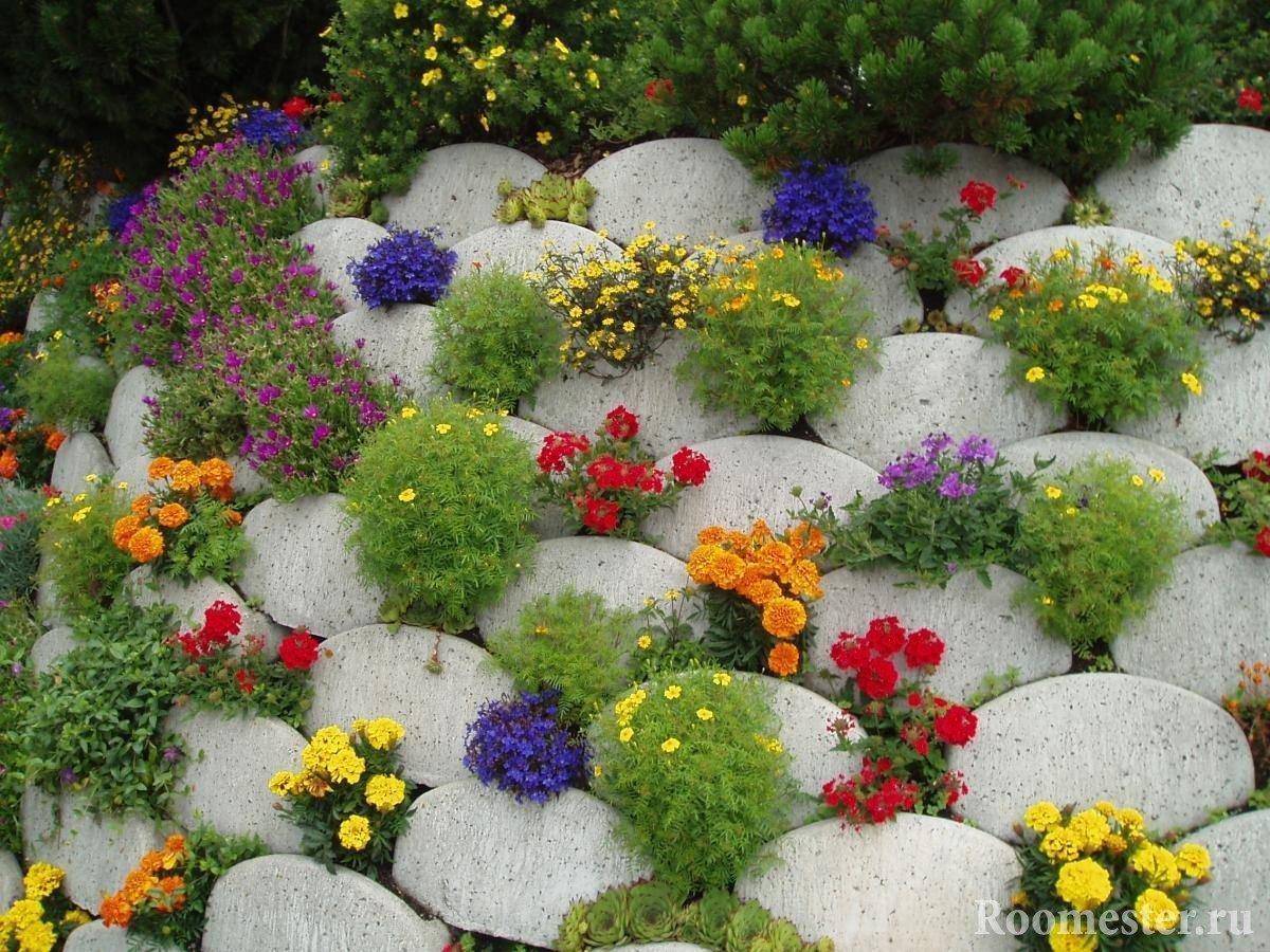 Цветы между камней