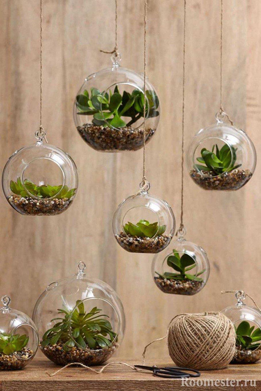 Растения в банках
