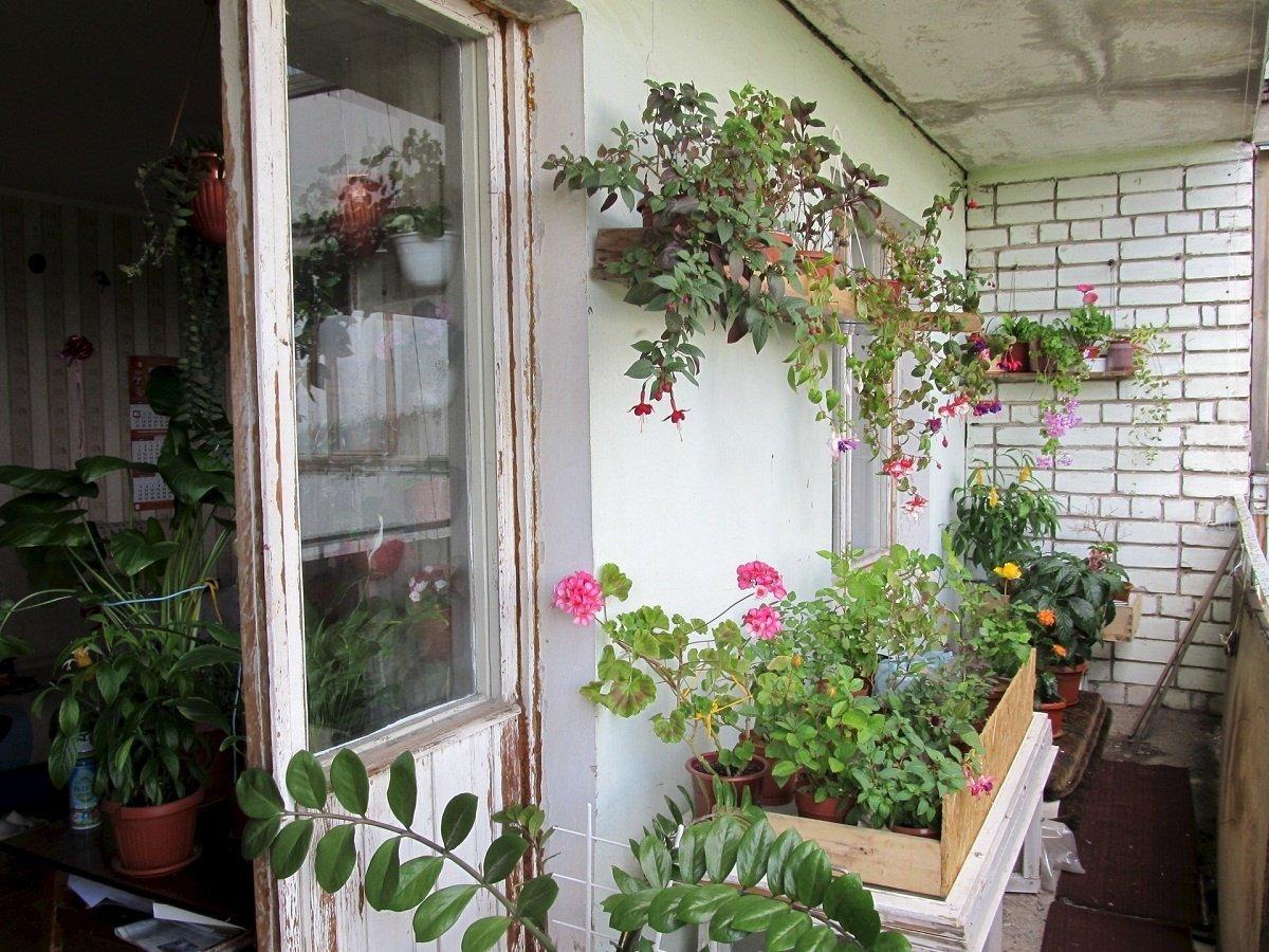 Оформление балконов цветами фото своими руками