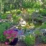Много цветов вокруг домашнего пруда