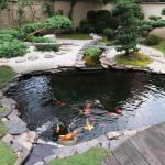 Рыбки в пруду у дома