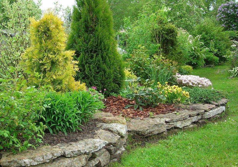 Кипарисовые растения на участке
