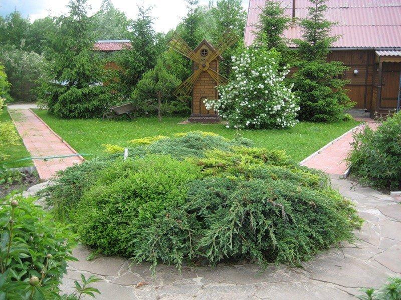Можно ли сажать пихту во дворе дома 53