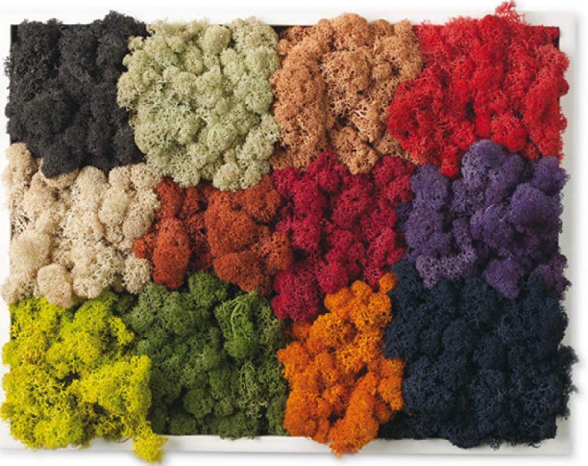 Цветной мох