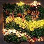 Сочетание цветочков и мха