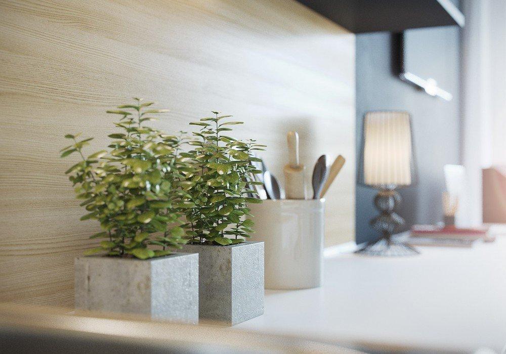 Растения для декора кухни