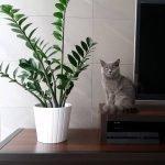 Небольшое комнатное растение